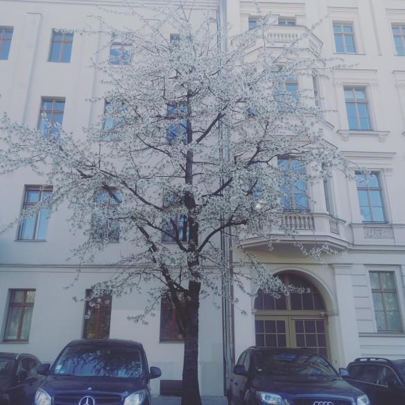 Spring in Berlin